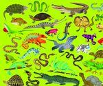 """Пазл """"36 Животных, Рептилии и земноводные"""", 300 деталей"""