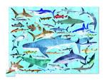 """Пазл """"36 Животных, Акулы"""", 300 деталей"""